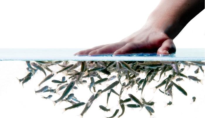 spa fish-пилинг рыбками гарра руфа
