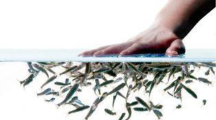 spa фиш пилинг рыбками гарра руфа